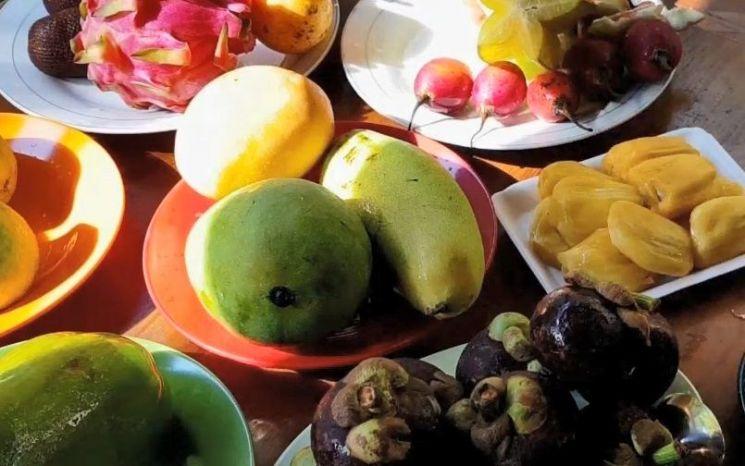 요즘 즐겨찾는 망고 등 열대과일들은 대부분 냉장고에 넣지 않고 실온에서 숙성시킨 후 먹어야 제맛을 즐길 수 있습니다. [사진=유튜브 화면캡처]