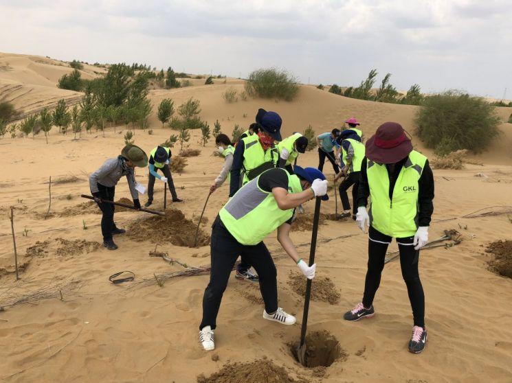 지난해 5월 중국 쿠부치사막에서 식재작업을 하고 있는 GKL 직원들