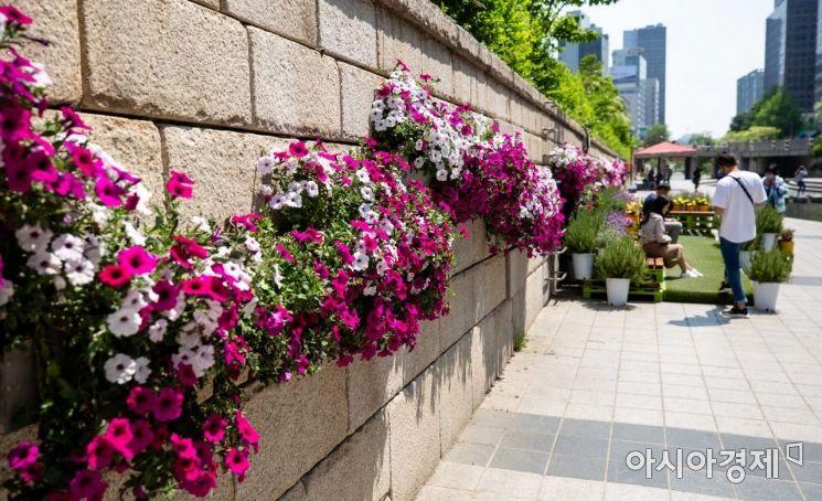 [포토]청계천에 마련된 정원