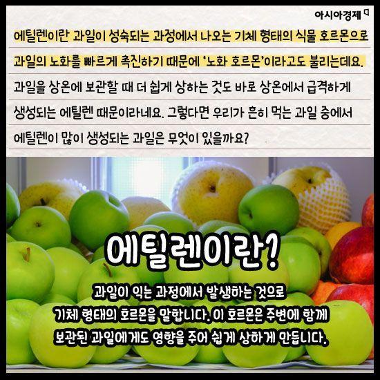 [카드뉴스]'사과' 옆에만 있으면 늙는 '배' 왜?