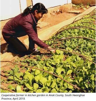 유엔 식량농업기구(FAO)와 세계식량계획(WFP)은 3일 올해 북한의 식량 수요를 충족하는데 필요한 곡물 수입량이 136만t이라고 발표했다. 사진은 북한 주민이 지난 4월 황해남도의 밭에서 일하는 모습. <사진 제공=WFP·식량농업기구(FAO)>
