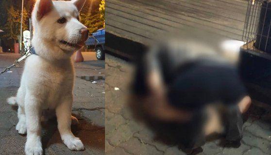 동물학대방지연합(KAPCA)이 공개한 피해 강아지와 A씨의 범행 사진 / 사진 = 동물학대방지연합 인스타그램 캡처