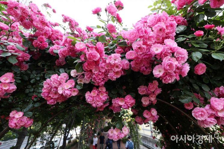 [포토]하늘에 핀 분홍빛 장미