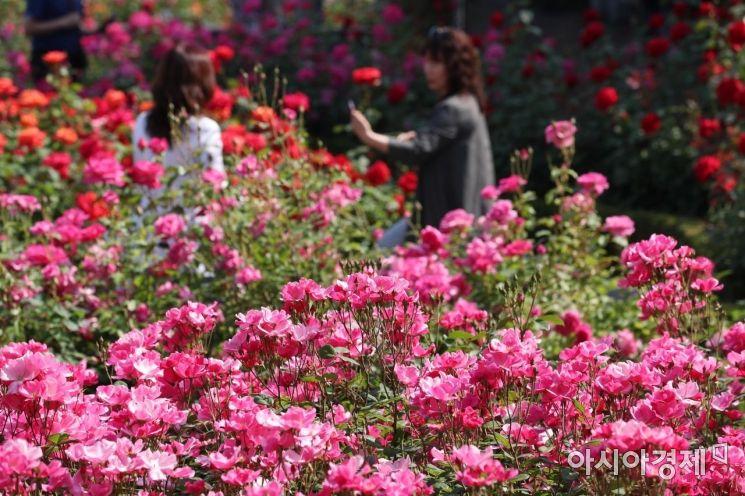 [포토]2019 서울 장미축제, 장미꽃 향기 만발