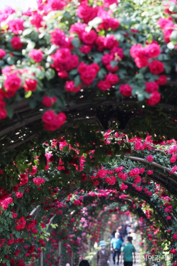 [포토]'장미 향기에 취한다'