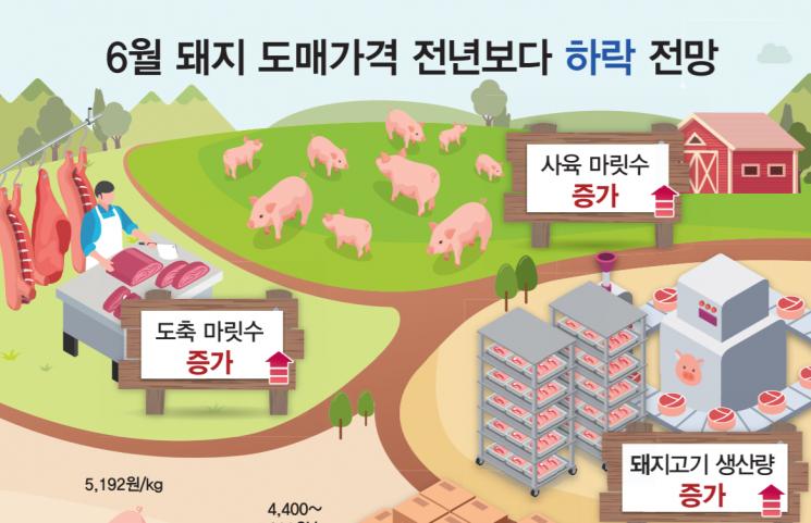 내달 돼지 도매가 내린다…전년동기比 최대 15%↓