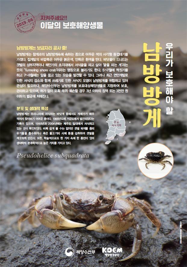 짝짓기철 맞은 '남방방게'…6월의 보호대상해양생물