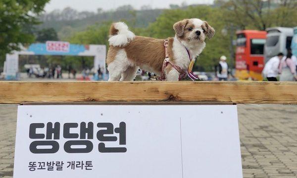 '강아지와 함께 출근해요' 복지에 힘쓰는 '데일리펀딩'