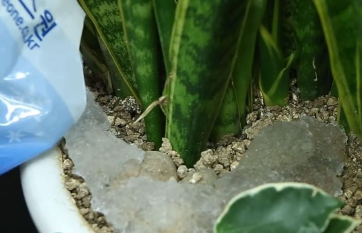 아이스팩의 내용물인 SAP를 화분에 부어 토양보수제로도 사용할 수 있습니다. [사진=유튜브 화면캡처]