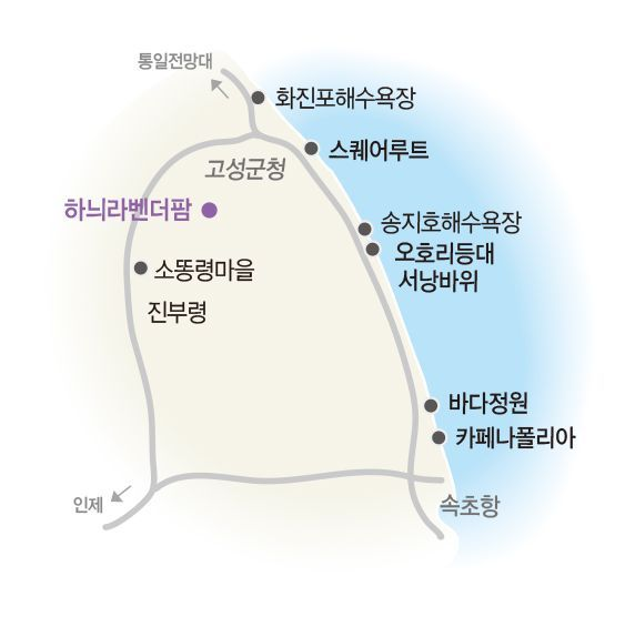 [조용준의 여행만리]설레는 보랏빛 향기…꿈꾸는 동화마을