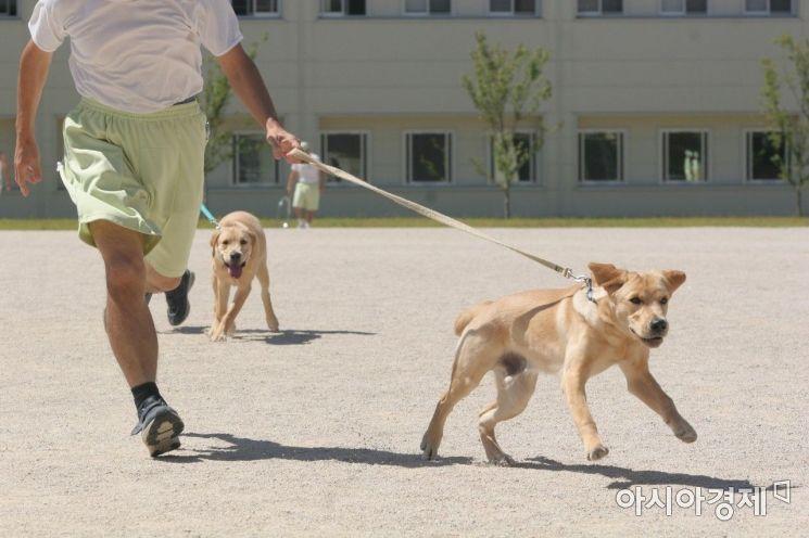 일본 시마네현에 있는 아사히 사회복귀촉진센터에서 재소자들이 안내견을 훈련하는 모습. 재소자들은 이곳에서 10개월간 안내견을 돌보고 훈련하며 더불어 사는 법을 배운다.(사진=오쓰카 아쓰코 제공)