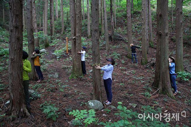 광양 백운산 치유의 숲(사진=광양시 제공)