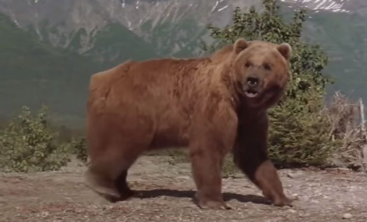 '시튼동물기'에 등장하는 '회색곰 와이브'는 자신의 세력을 다스릴 힘이 없어졌음을 깨닫자 유황냄새가 나는 곳으로 가 스스로 목숨을 끊습니다. 사진은 영화의 한 장면. [사진=유튜브 화면캡처]