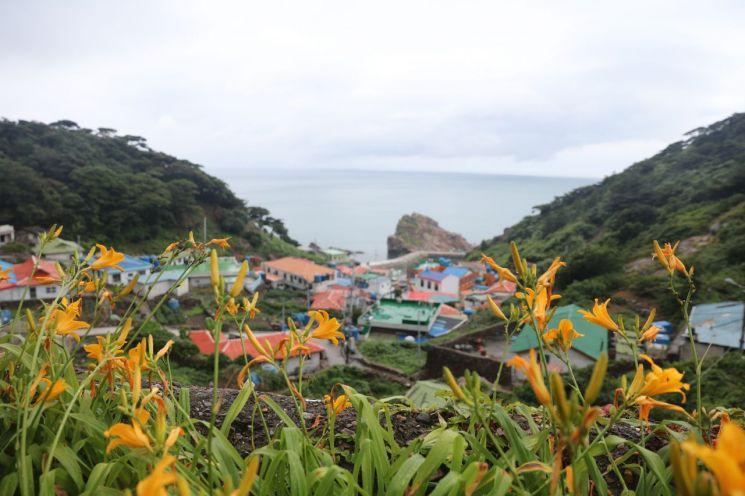 지난 18일부터 21일까지 홍도에서 '문화재와 국립공원, 그리고 야생화를 보다'라는 주제로  '섬 원추리 축제'를 개최했다. (사진제공=신안군)