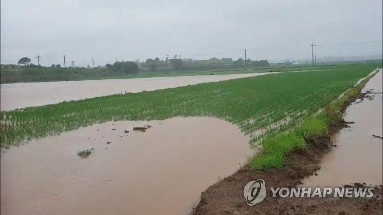 전남 신안군의 한 논 물웅덩이에 8·6세 여아가 빠져 익사했다. 위 이미지는 본문과 무관함./사진=연합뉴스