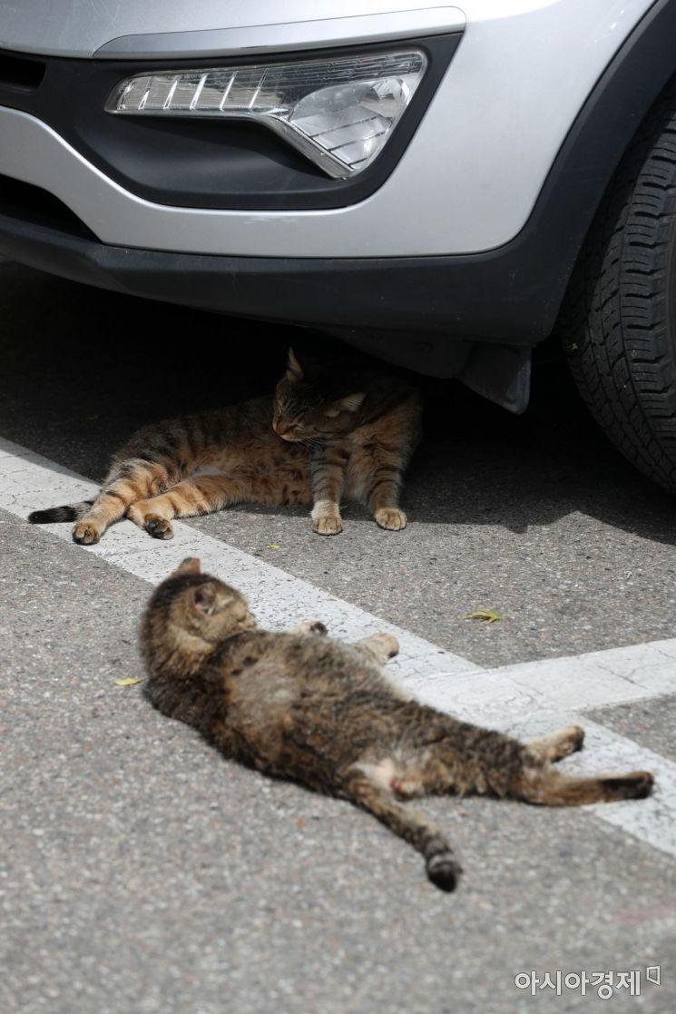 [포토]'고양이도 피서 가고 싶다냥'