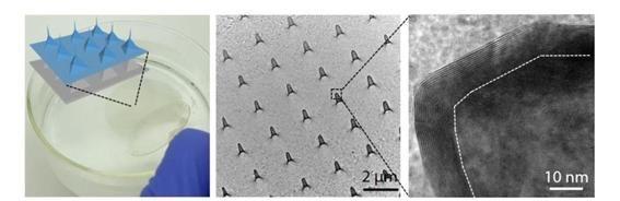 입체 돌기 형태의 멤브레인 반도체 모식도와 전자현미경 이미지