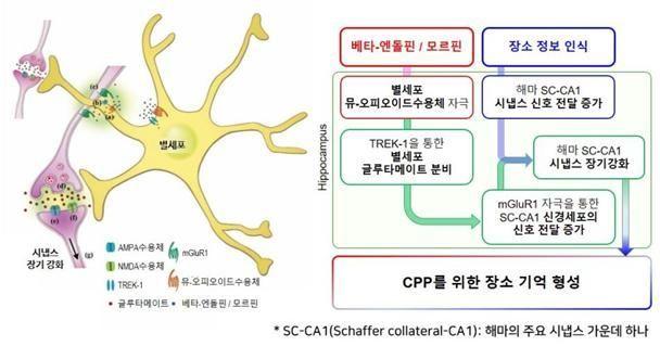 별세포를 통한 특정 장소 선호 기억 형성의 분자 및 세포적 메커니즘