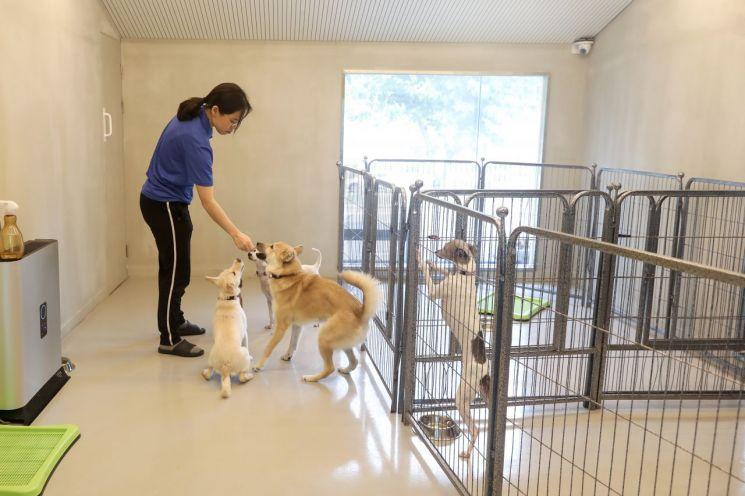 서초동물사랑센터 유기견 24마리 중 18마리 주인 찾은 사연?