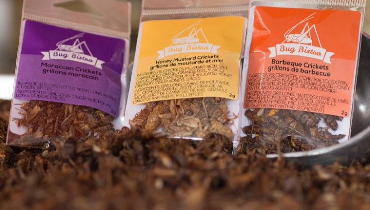 다양한 맛을 즐길 수 있는 건 곤충 식품./사진=버그 비스트로 제공
