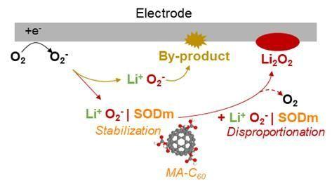 리튬공기전지 시스템에서 예상되는 불균등화 반응 메커니즘