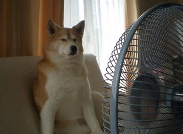 유독 한국에서만 선풍기 사망 보도가 나오는 이유는 무엇일까요? 해외에서는 단 한 건도 사례가 없다고 합니다. [사진=유튜브 화면캡처]