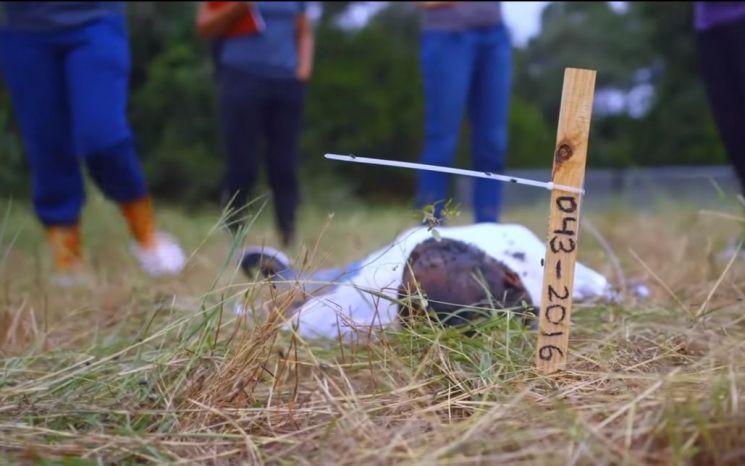 미국 테네시대 시체변화학과 학생들이 부패 중인 시체를 관찰하는 모습. [사진=Natgeotv 화면캡처]