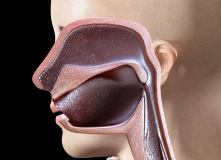 콧구멍이 두 개인 것도 다 이유가 있습니다. 두 콧구멍은 3~4시간 간격으로 번갈아 활동합니다. [그림=유튜브 화면캡처]