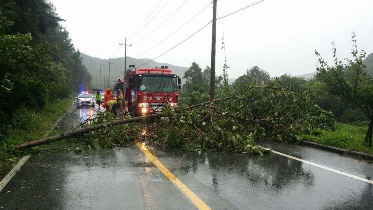 전남 함평군 한 도로에서 강풍으로 인해 나무가 쓰러져 도로가 한때 통제됐다. 사진=함평소방서 제공