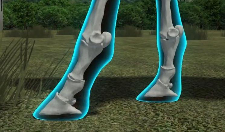 진화를 거쳐 하나만 남은 말의 발가락. [그림=유튜브 화면캡처]
