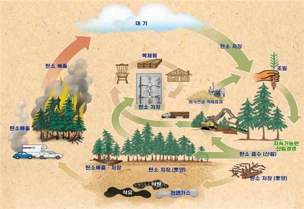 산림의 온실가스 저감효과 개념도. 산림청 제공