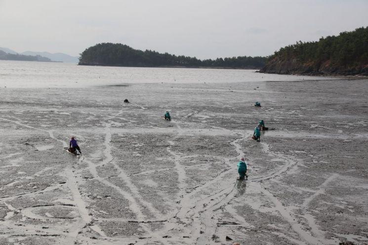 보성 갯벌, 유네스코 세계자연유산 등재 속도 낸다