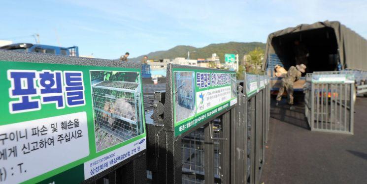 16일 강원 화천군 화천읍 배수펌프장 주차장에서 야생 멧돼지를 잡는 포획틀이 군부대에 전달되고 있다. (사진=연합뉴스)