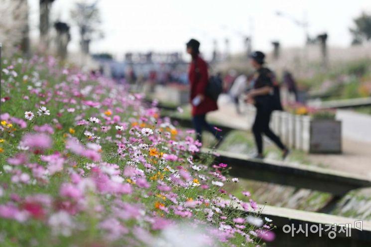 완연한 가을 날씨가 이어진 17일 서울 마포구 하늘공원에서 시민들이 활짝 핀 코스모스를 지나고 있다. /문호남 기자 munonam@