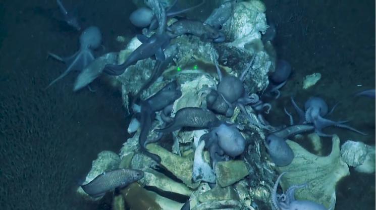 해저 생물들이 고래 사체를 먹어치우는 장면이 포착됐다/사진=노틸러스 유튜브 화면 캡처