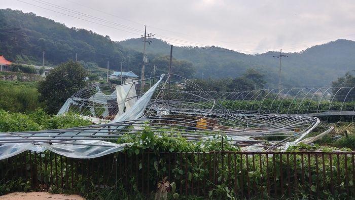 태풍 '링링'으로 부서진 비닐하우스 [사진=인천 강화군]