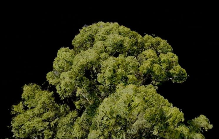 영국과 말레이시아 연구팀이 발견한 세상에서 가장 큰 열대나무. [사진=옥스포드대]
