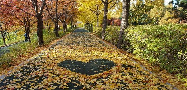 강남구 양재천 산책로 '낙엽의 거리' 조성
