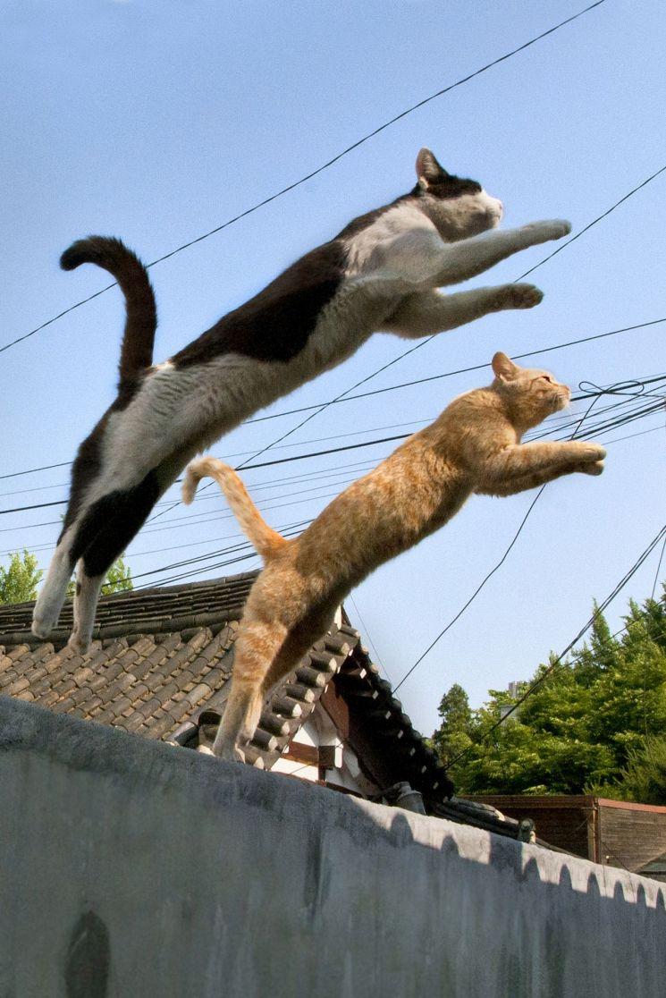 2011년 서울 종로구 통의동 한 골목에서 고경원 야옹서가 대표가 찍은 고양이 사진. 이 사진을 찍기 위해 담벼락 아래 누워서 기다리기를 마다하지 않았다. (제공=야옹서가)