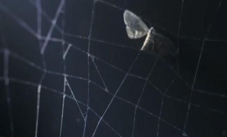 거미줄의 강도는 철의 5배나 된다고 합니다. 거미줄의 이렇게 튼튼한 이유는 무엇일까요? [사진=유튜브 화면캡처]