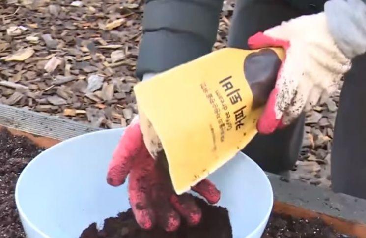 커피 찌꺼기는 다른 혼합물과 섞은 후 비료나 퇴비로 사용되기도 합니다. [사진=유튜브 화면캡처]