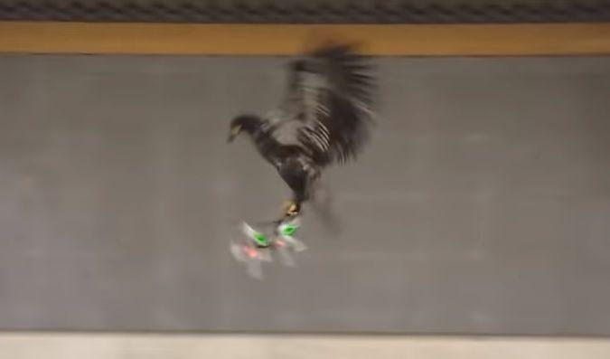 독수리가 비행 중인 드론을 포획하는 순간. [사진=유튜브 화면캡처]