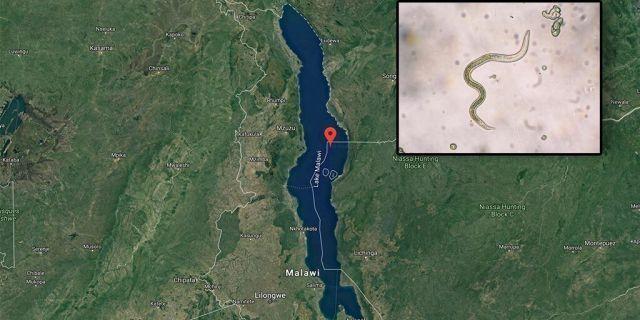 아프리카 말라위 호수/사진=미국 폭스뉴스 화면 캡처