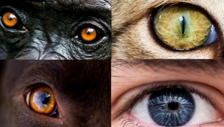 어느 눈이 사람의 눈인지 금방 찾으시겠지요? 사람의 눈만이 가진 특징이 있기 때문입니다. [사진=유튜브 화면캡처]