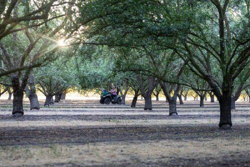 캘리포니아 아몬드 협회, 590만 달러 규모 연구 투자로 미래 농업 가속화
