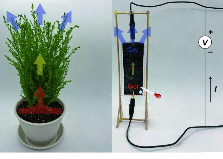 식물의 증산 과정을 통해 수분이 순환하는 원리를 모사해 수분의 순환을 전기 에너지로 변환하는 발전기