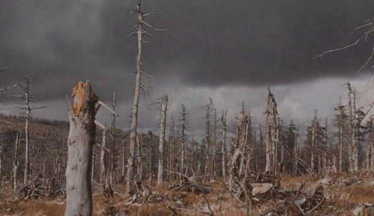 산성비는 수목을 고사시켜 토양을 사막화 시킵니다. [사진=유튜브 화면캡처]