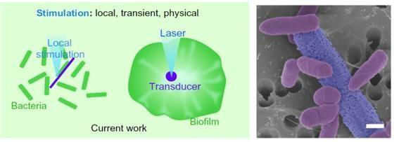 제작된 실리콘 나노선 일부에 강한 레이저 빛을 가해 순간적으로 열을 발생시켜, 열원 근처로 박테리아가 모이는 과정에 대한 모식도(왼쪽)와 실제 나노선 근처에 모인 모습에 대한 현미경 사진이다.