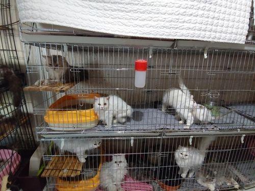14일 부산 수영구 한 주택에서 고양이 400여마리가 철창에 갇힌 채 발견됐다.  / 사진=부산경찰청. 연합뉴스