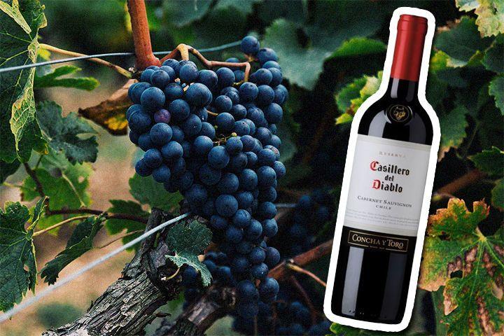 궗吏=(룷룄) Winefolly/ (씤) 씤굹씪 솃럹씠吏